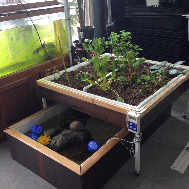 Easy to build aquaponics for Aquaponics aeration